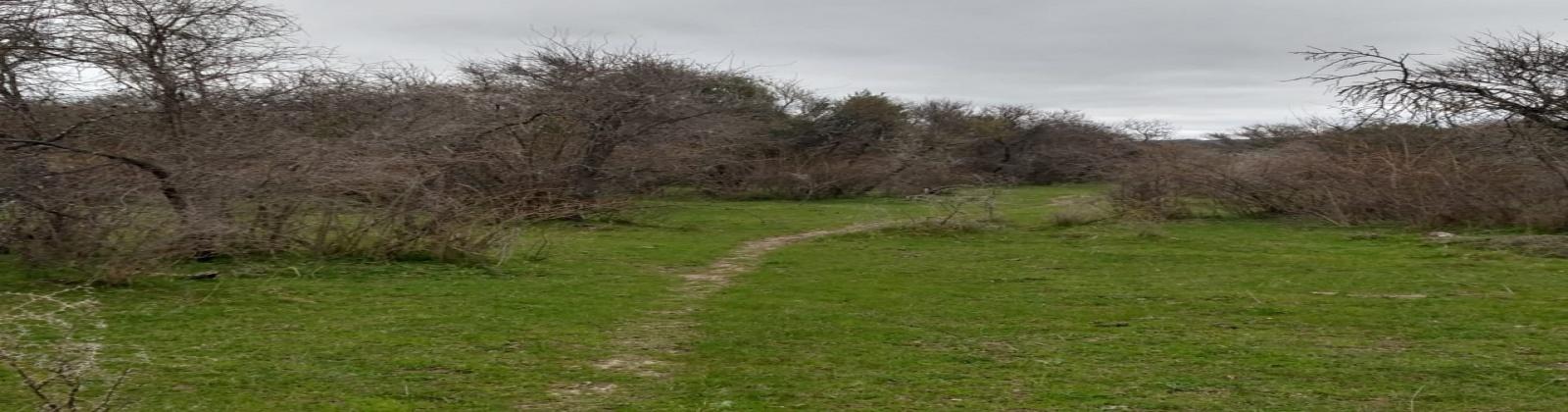 Cruce la Patagua, Pocillas, Cauquenes, Región VII - Maule, ,Terreno,Venta,Cruce la Patagua, Pocillas,1029